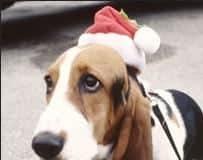 ANIMAL warns against giving pets as presents.jpg