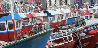 Warmer climate brings different fish to Portuguese waters