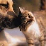 Algarve animal charity merger.jpg