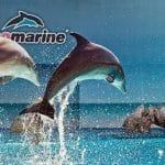 zoomarine.jpg