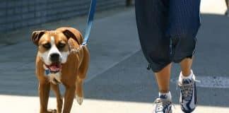 Goldra Sponsored Dog Walk and Afternoon Tea