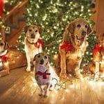 Give your dog a safe Christmas
