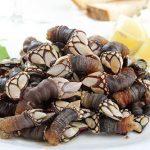 Goose barnacles take centre stage in Vila do Bispo