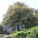 magnoliacentenaria-monchique.jpg