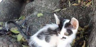 george-as-small-cat.jpg