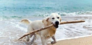 pet-friendly-dog-on-the-beach.jpg