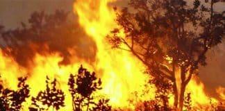 incendio-florestal.jpg
