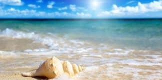 shell_on_the_beach-wide.jpg