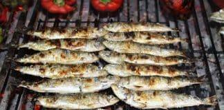 sardines_cmp_irina_ramos.jpg