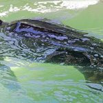 Rescued turtle refuses to eat as Zoomarine urges fishermen to catch jellyfish