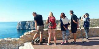 Sagres Birdwatching Festival returns between October 10 and 13