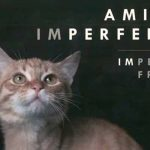 ('Imperfect Friends' book to be presented to public at Lagoa library on October 4