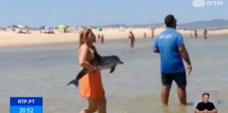 Baby dolphin rescued in Ria Formosa
