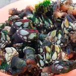 Vila do Bispo invites all to shellfish extravaganza