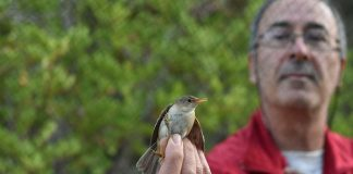 """Each bird tells a story"": Bird lover explains importance of ringing"