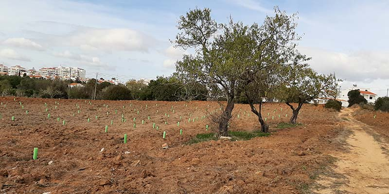 Volunteers plant record 42,000 trees to make Algarve greener