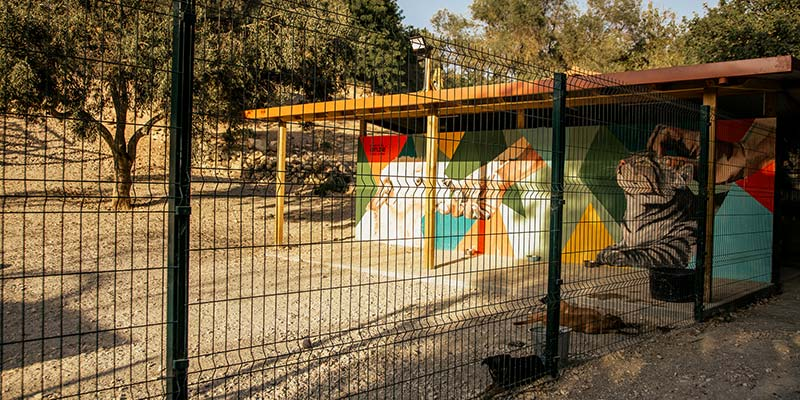 Groundbreaking kennels face demolition