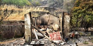 Architects to help rebuild houses destroyed by wildfire in Monchique