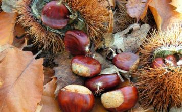 "2019 sees ""special evidence"" in Portugal of devastating chestnut fungus"