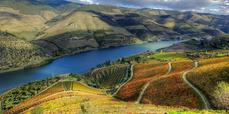 Lithium mines 'would threaten quality of Douro world heritage wines'