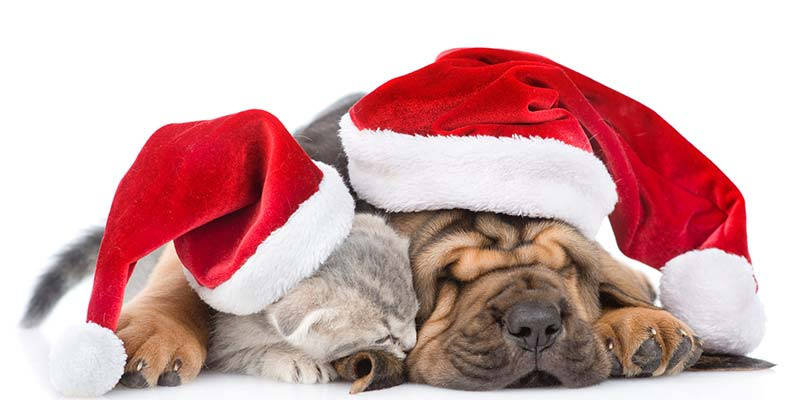 Christmas Sing,Along in aid of Algarve\u0027s animals in need