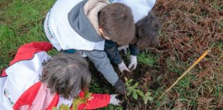 Volunteers plant over 2,000 trees in fire-ravaged Monchique