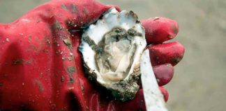 Controversy erupts over plan to set up 10-hectare oyster farm in Ria Formosa