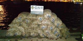 GNR police seize 1.7 tonnes of illegally captured cockles in Algarve