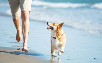 PAN continues to fight for pet-friendly beaches in Algarve