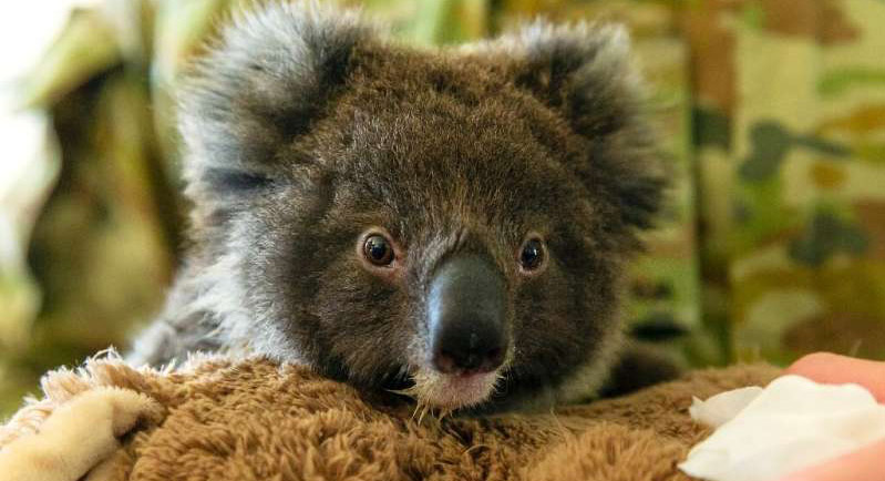 Lisbon Zoo starts fundraising campaign to help animal victims of Australia's fires
