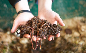 Compost and worms