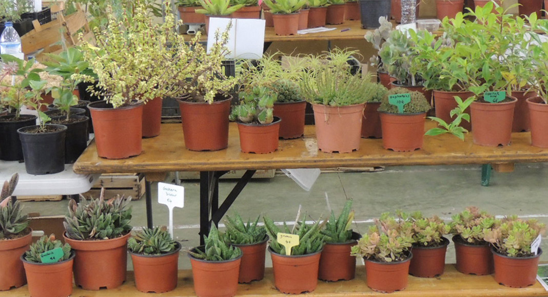 New venue for Spring Mediterranean Gardening Fair