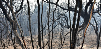 Monchique fire: EDP and employee named suspects