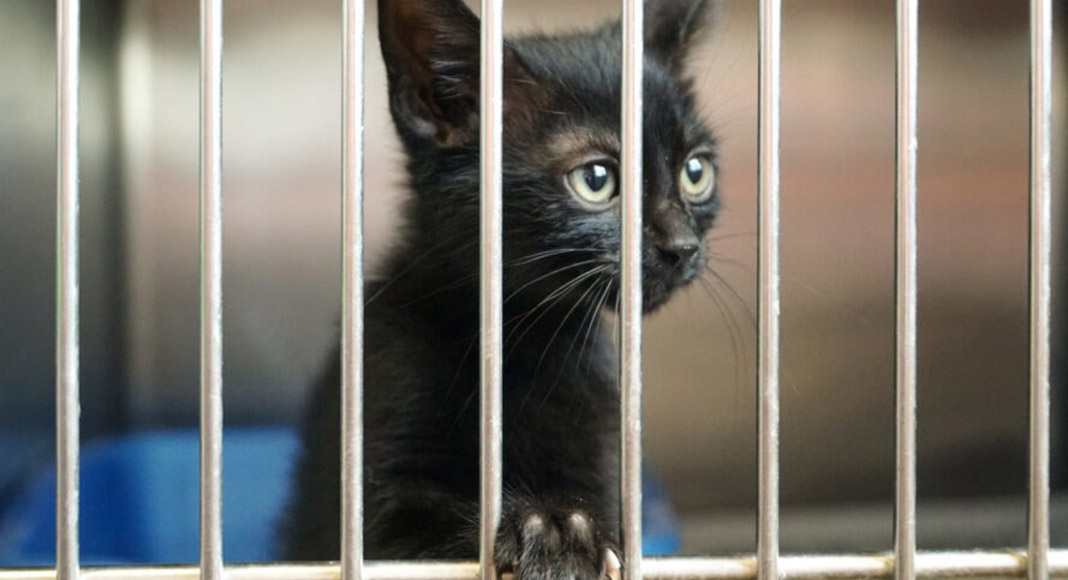 Municipal kennel needed as animal association told to vacate shelter