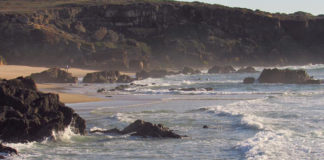 Petition to save Costa Vicentina natural park from 'uncontrollable intensive agriculture' enters parliament