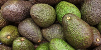Woman arrested after being caught stealing over a tonne of avocados in Algoz