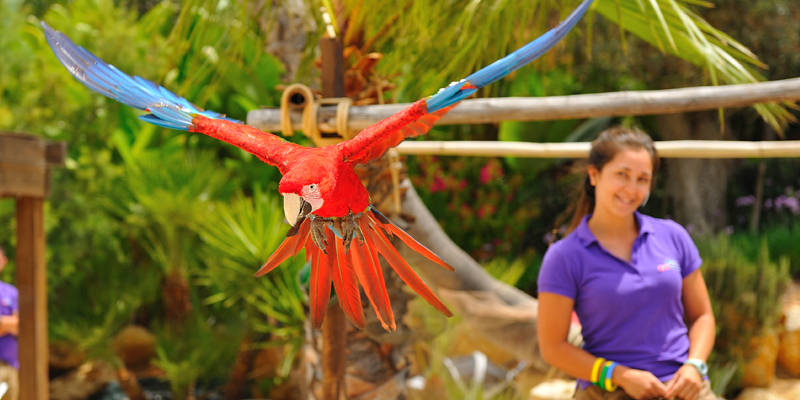 A tropical bird flying at Zoomarine's Flying Colours presentation