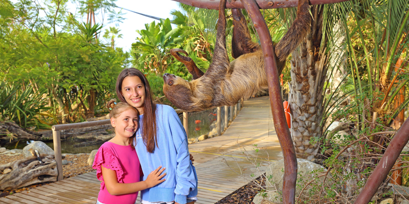 Two girls looking at one of the sloths at Zoomarine