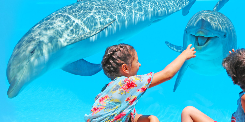 Two children looking at two of Zoomarine's dolphins